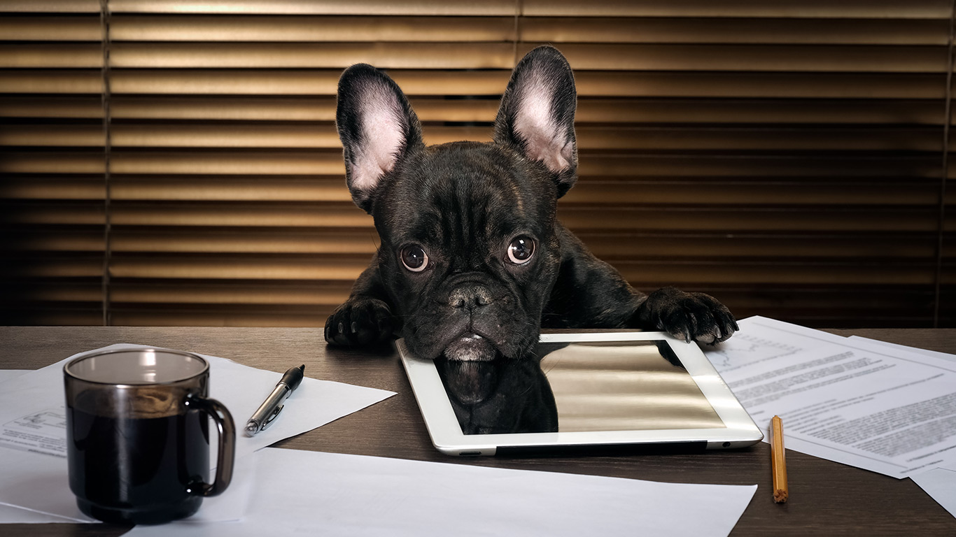 Dog at an office desk